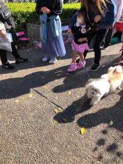 犬のお散歩体験とはりねずみのふれ合い(わーくわくすざか2020)
